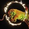Цирки в Петушках