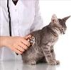 Ветеринарные клиники в Петушках